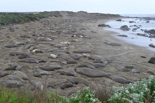 Seelöwen als Abwechslung zu den vielen Seevögeln