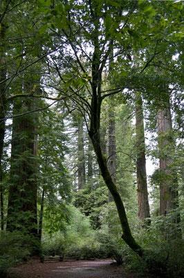 Zu Fuß geht's tiefer in den Wald