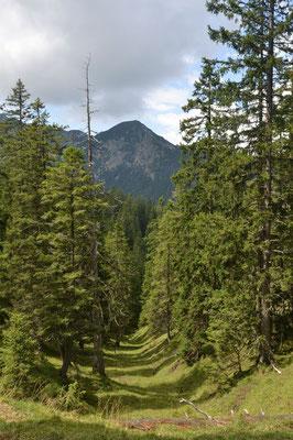 Urige Wälder und …