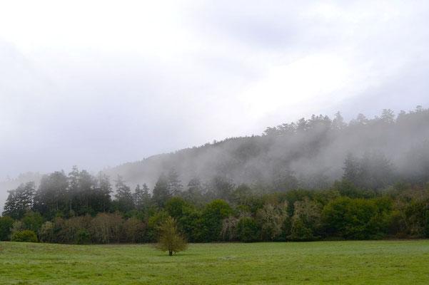 Nebel zieht über's Land ...