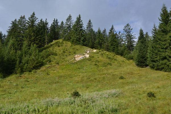 Entlang des Kammes geht es durch den Wald bergauf.