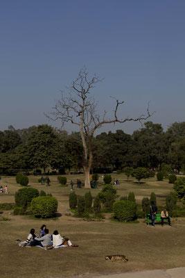 Lodhi garden, India
