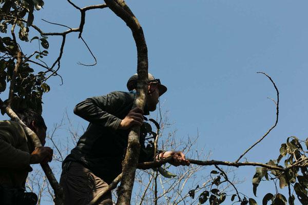 Nach Elefanten ausschau halten, Chitwan National Park, Nepal