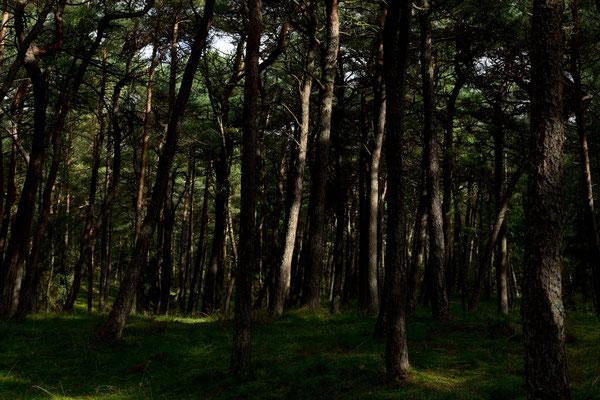 Unberührter Waldboden?