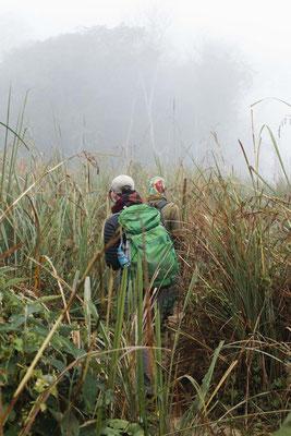 Immer hinterher,  Chitwan National Park, Nepal