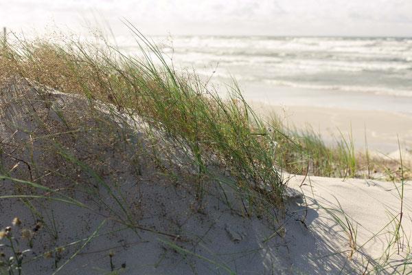 Der Strand von der Düne aus
