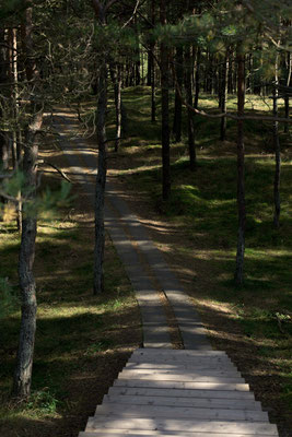 Forest path leading up the dune