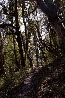 Wald, Mardi Himal Trek, Nepal