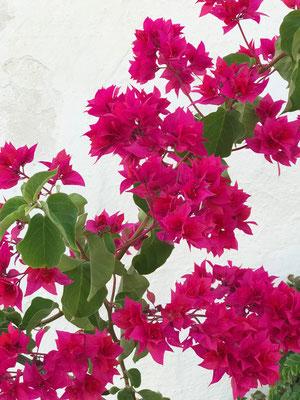 Sommer blossom