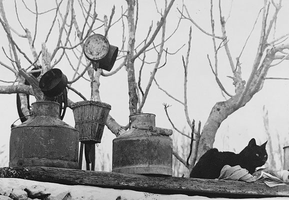 Chorio in Moroergo (Mykonos), dairy utensils and a cat, ca. 1977-1979