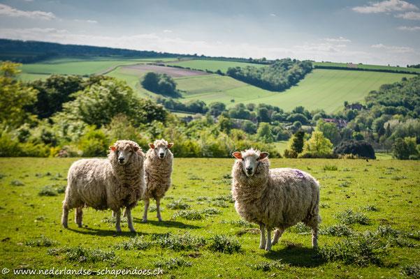 Auch Schafe gab es im Park
