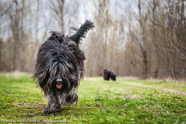 Briana, unterwegs mit Smilla - vor nicht allzu langer Zeit waren wir noch mit 5 Hunden unterwegs, nun warten die Senioren zuhause...