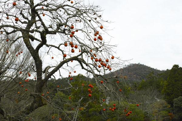 静かな水面。残り柿が色を添える・・・。ああ、京都っていいな。