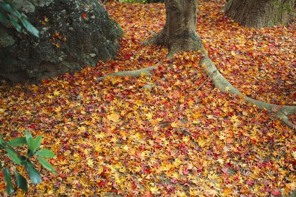 紅葉の過ぎた境内では、散り紅葉が秋の終わりを告げていた。