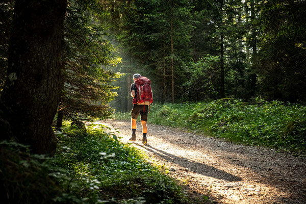 My dad hiking through the forest in the early morning on day 9 of Alta Via 1
