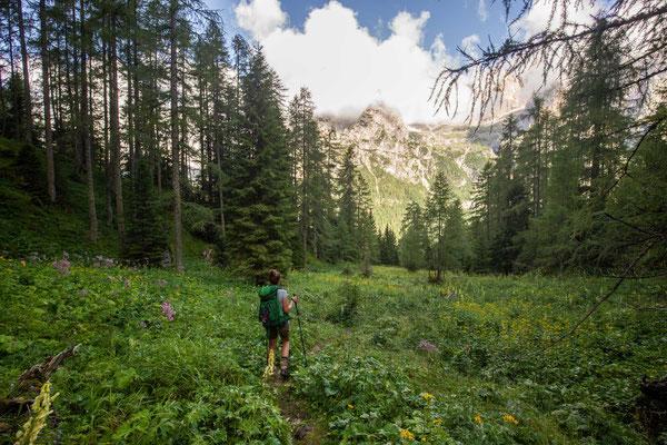 The meadows close to rifugio Treviso - day 12 of Alta Via 2