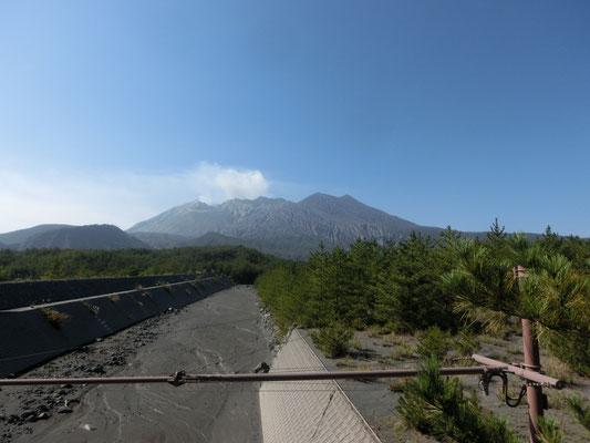 ここから見上げる桜島はとても男らしく迫力があります。手前は土砂災害防止用の砂防ダム。