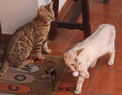 Zoe y Zariah, es mio!!!