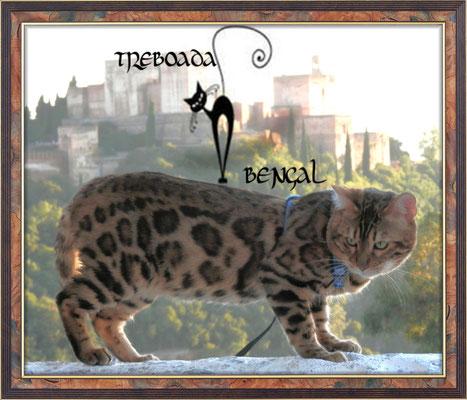Leocats George Orwell de Treboada en la Alhambra