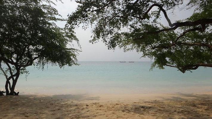 Sharkbay, Ko Tao
