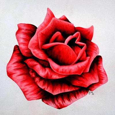 2017 Rote Rose - Alkoholmarker und Farbstifte