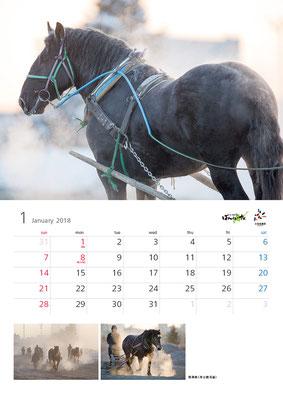 ばんえい競馬カレンダー1月