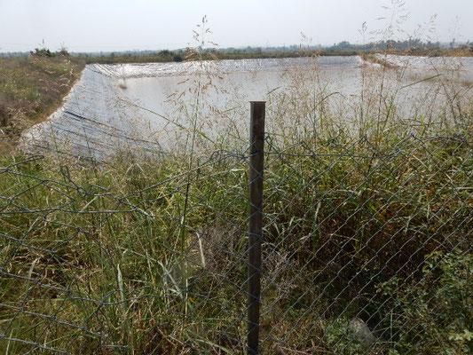近くにあるラワル湖は近年干上がってきてしまったので、NARCでは雨水の池を作って、種々の植物の水源としている。