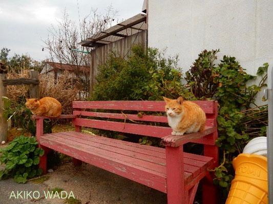 フェリー乗降場の前には猫たちがごろごろ、まったり。