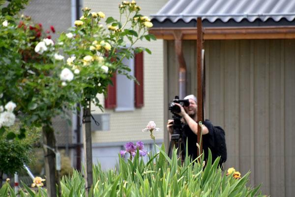 26.06.2021 die letzten Iris fotografieren / photographing the last irises