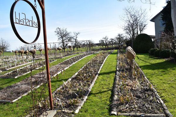 19.02.2021 - 'Das IrisFeld' Start der Gartensaison 2021 - start to the garden season 2021