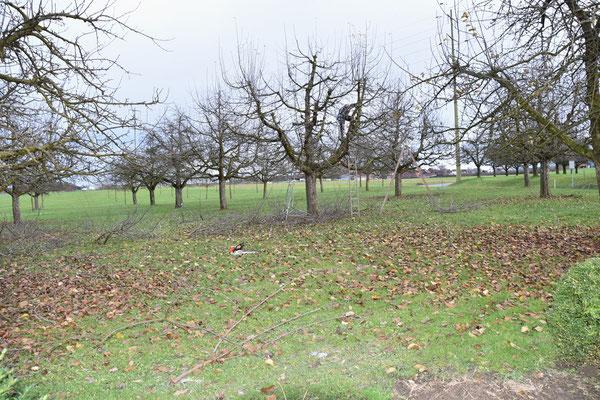 23.12.2020 - Baumschnitt - pruning apple trees
