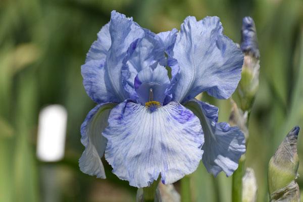 23.05.2021 Iris 'Gnu Blues' Kasperek 1993