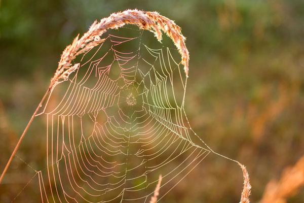 Oktober 2016 - Spinnennetz im Morgenlicht