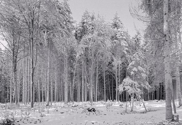 Winterwald bei Arnegg
