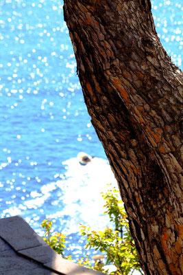 Cinque Terre, Italie 30