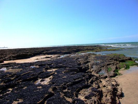 Île de Ré 35