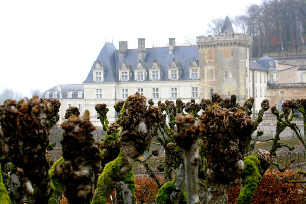 Château de Villandry, La Loire 75