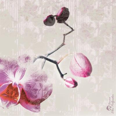 """""""Orchidee"""", 2009, Unikat, Druck auf Canvas, 50x50 cm, verkauft"""