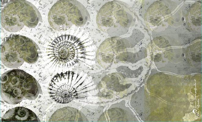 """""""Ammonoidea"""", 2010, Unikat"""