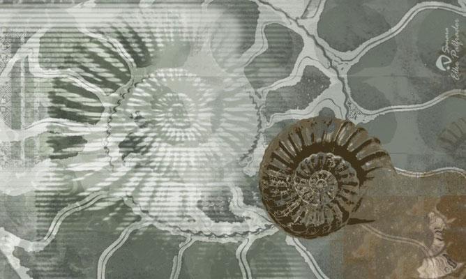 """""""Ammonoidea"""", 2009, Unikat, Druck auf Canvas, 100x60 cm, verkauft"""
