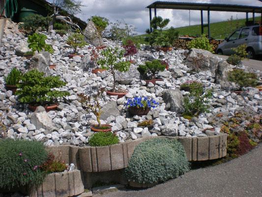 Steingarten mit Bonsai Bäumchen
