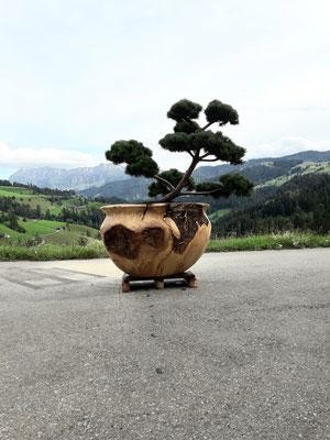 Grosser Bonsai Topf aus Ahornholz