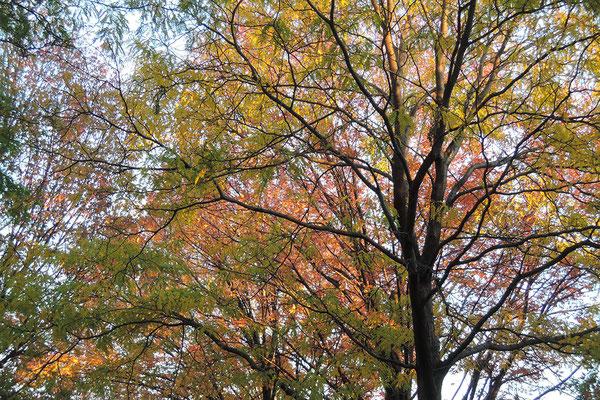 paysage-automne-canada-quebec