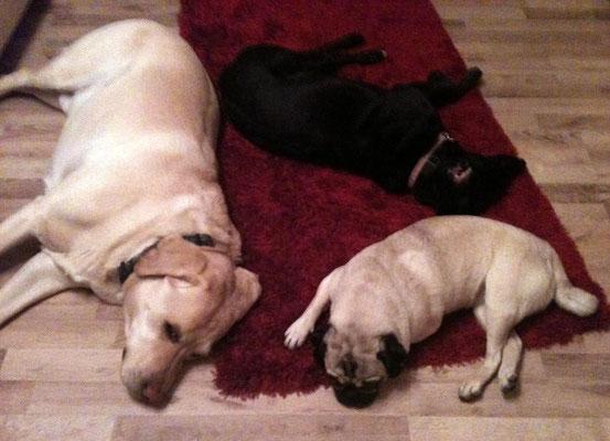 Müde Hunde