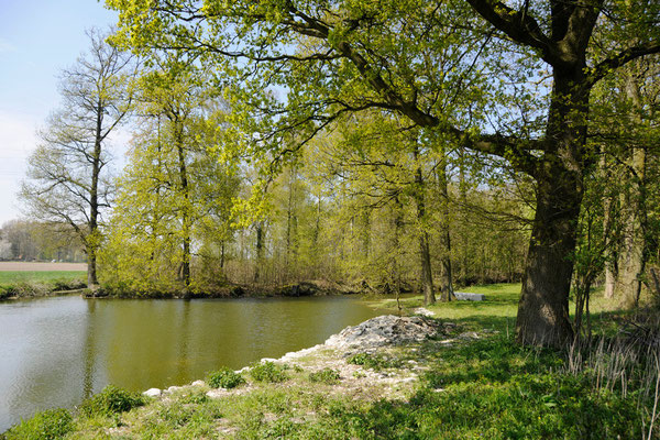 Der alte Teich, eine ehemalige Tonabgrabung.
