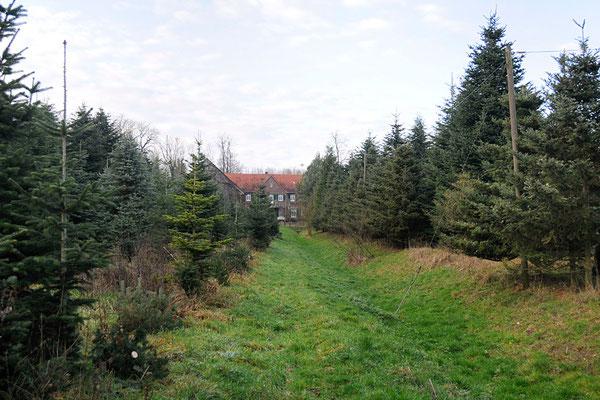 Blick vom Ende des Gartens auf das Haupthaus durch die Tannenbaumplantage.