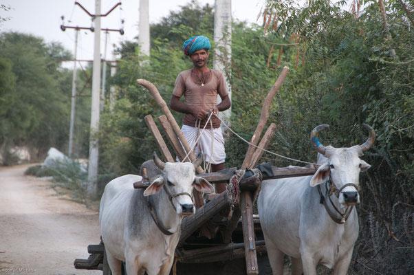 Ochsenkarren von Udaipur