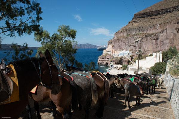 Eine große Rolle spielt auf Santorin schon seit Jahrtausenden der Weinbau.