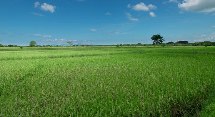 Etwa zwei Drittel der Insel ist mit Regenwald bedeckt; Reisanbau aber überall zu sehen.