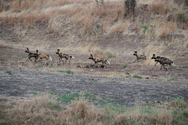Im Chobe-Nationalpark, Botswana
